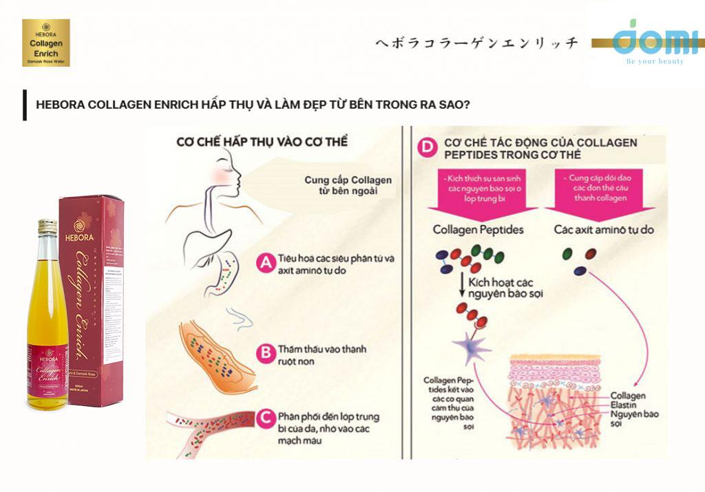 Hebora Collagen Enrich hấp thụ và làm đẹp từ bên trong ra sao?